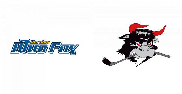 Herning Blue Fox - Rødovre Mighty Bulls